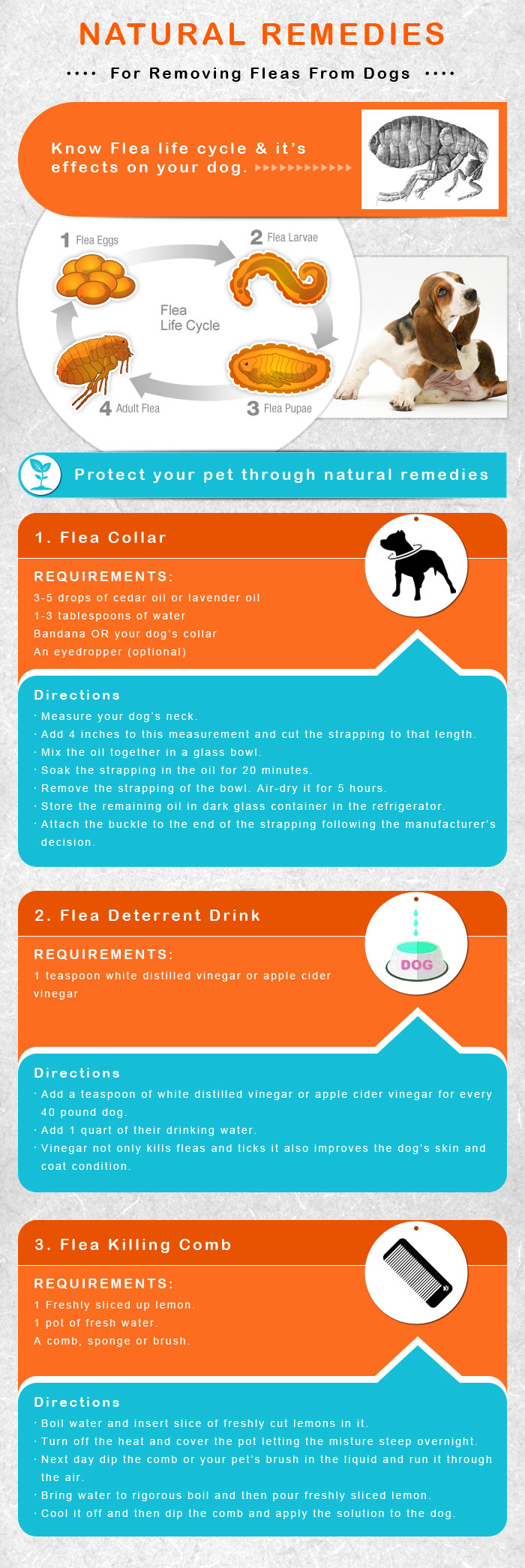 Natural Remedies for Removing Fleas from Dogs