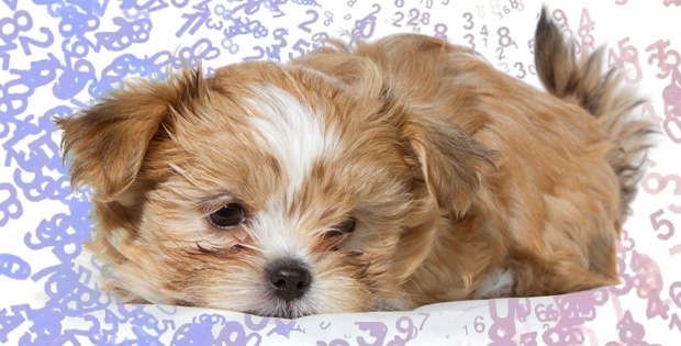 Decoding the Best Pet Food Intake for Your Dog
