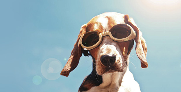 4 Practical Advices to Protect your Pets from Skin Damage due to Excessive Sunlight