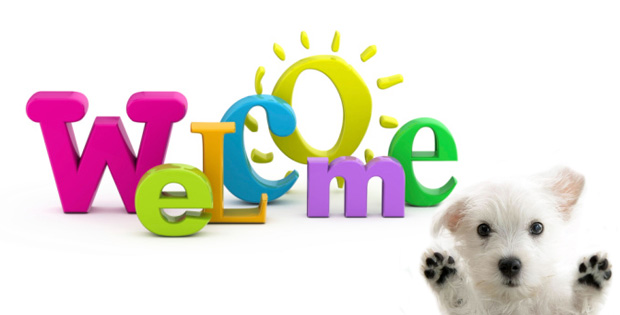 Welcome to the World of Pet Health Care at VetSupply Blog!