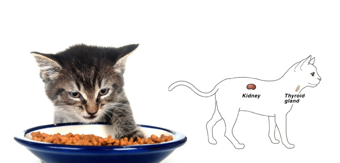 Diet that Compliments Cats Suffering from Renal Disease