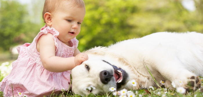 Top Seven Tips to Prepare Your Dog for the Newborn