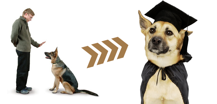 Leading your Pet Dog Training to Excellence
