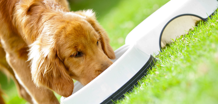 4 Mouth-Watering Low-Calorie Pet Treats that Assist in Maintaining Ideal Body Weight of Pets