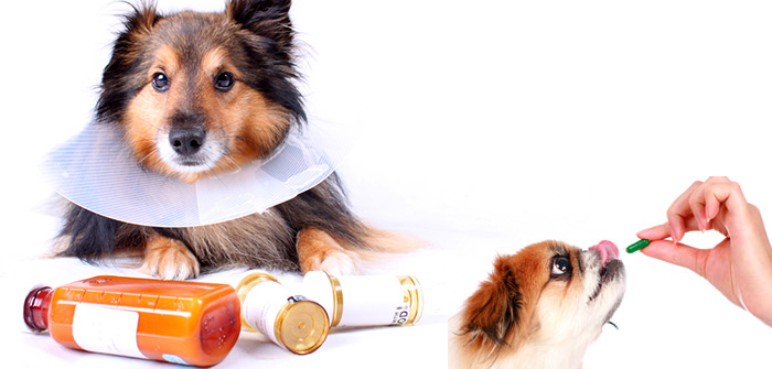 5 Ingenious Steps to Administer Tablets and Syrups to your Dog