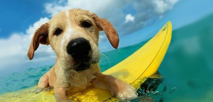 Summer Care Tips for Dogs
