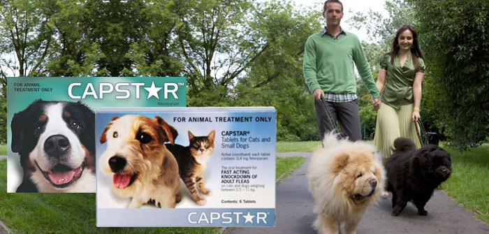 Capstar – The Best Flea Treatment After an Outdoor Trip