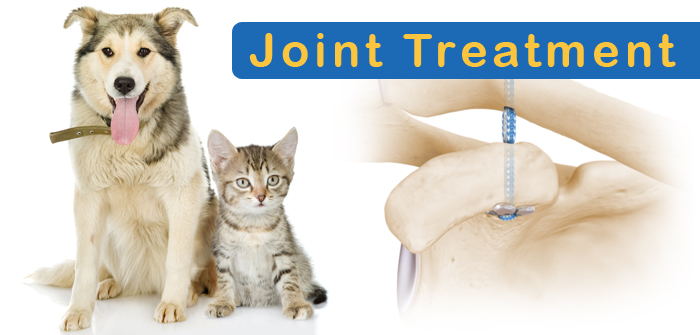 Joint Care Treatments that Keep Your Cats and Dogs Fit!