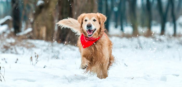 Must do Changes in Your Pet's Winter Schedule