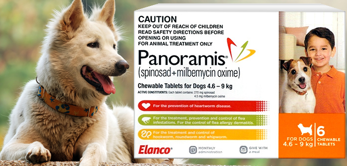 Panoramis – How it is effective for my pet