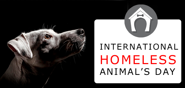 Huge Discounts to Avail This International Homeless Animals' Day 2015