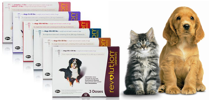 Revolution for cats and dogs – Best debugging solution!