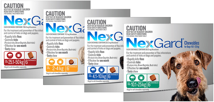 Nexgard Chewables for Dogs – Killing Fleas and Ticks Effectively