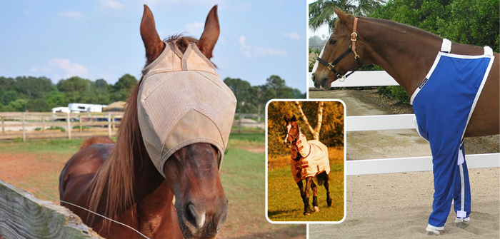How to Protect my Horses from Flies?