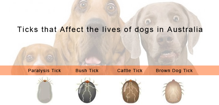 Different types of Ticks found in different Parts of Australia