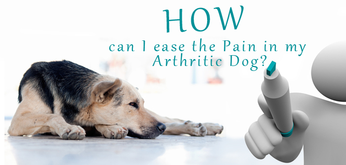 How can I ease the Pain in my Arthritic Dog?