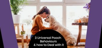 3 Universal Pooch Behaviours and how to Deal with it