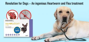 Revolution for Dogs – An ingenious Heartworm and Flea treatment