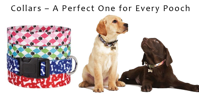 Collars – A Perfect One for Every Pooch
