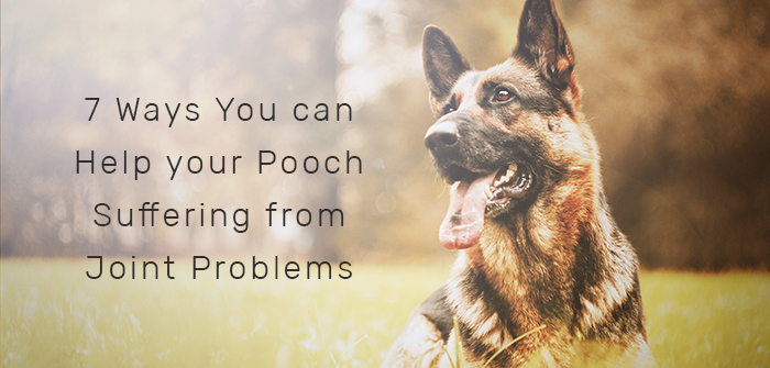 7 Ways You can Help your Pooch Suffering from Joint Problems