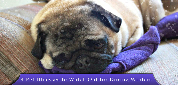 4 Pet Illnesses to Watch Out for During Winters