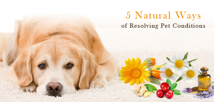 5 Natural Ways of Resolving Pet Conditions