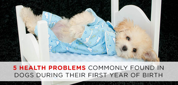5 Health Problems Commonly Found in Dogs During Their First Year of Birth