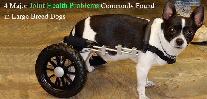 4 Major Joint Health Problems Commonly Found in Large Breed Dogs