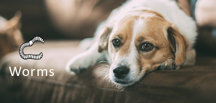 5 Most-Common Signs That Shows Your Dog has Worms