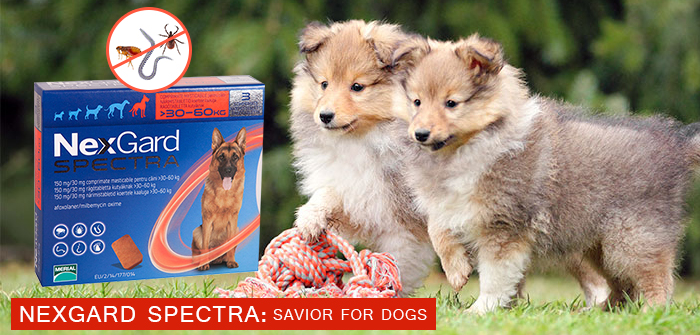 Nexgard Spectra : Savior for dogs