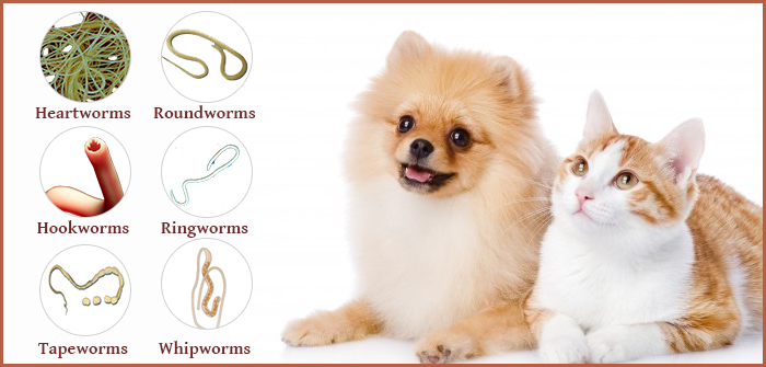 Worms and Your Pet: Types, Symptoms, Precautions and Treatments