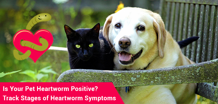 Is Your Pet Heartworm Positive? Track Stages of Heartworm Symptoms