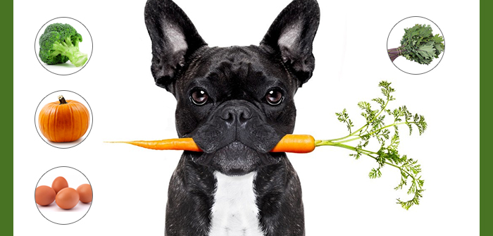 Most Nutritious Human Foods You Should Feed Your Fido