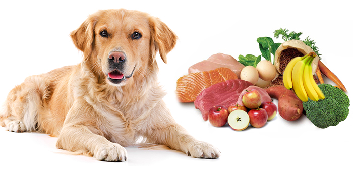 Haven't You Added These Foods To Your Dog's Food List?