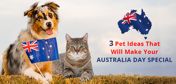 3 Pet Ideas That Will Make Your Australia Day Special