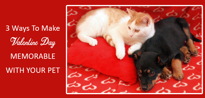 3 Ways To Make This Valentine Day Memorable With Your Pet