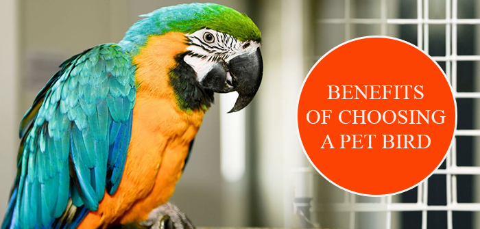 Benefits of Choosing A Pet Bird