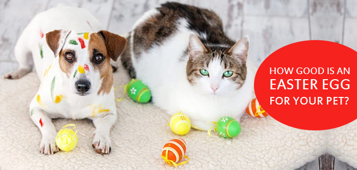 How Good Is An Easter Egg For Your Pet?