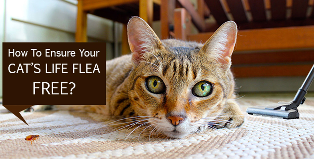 How To Ensure Your Cat's Life Flea Free?