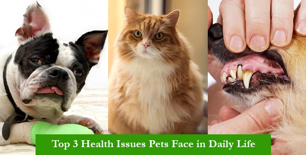 Top 3 Health Issues Pets Face in Daily Life