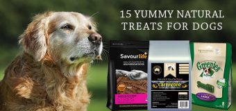 15 Yummy Natural Treats For Dogs