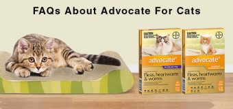 FAQs About Advocate For Cats