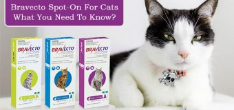 Bravecto Spot-On For Cats: What You Need To Know?