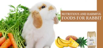 Nutritious And Harmful Foods For Rabbit