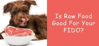 Is Raw Food Good For Your FIDO?