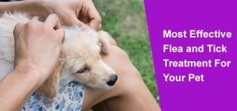 Most Effective Flea and Tick Treatment for Your Pet