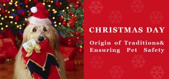 Christmas Day-Origin of Traditions& Ensuring Pet Safety