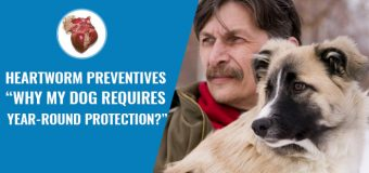 "Heartworm Preventives – ""Why My Dog Requires Year-Round Protection?"""