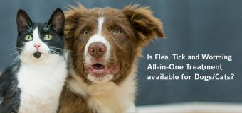 Is Flea, Tick and Worming – All-in-One Treatment available for Dogs/Cats?