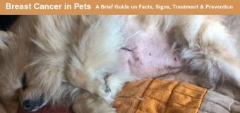 Breast Cancer in Pets: A Brief Guide on Facts, Signs, Treatment & Prevention